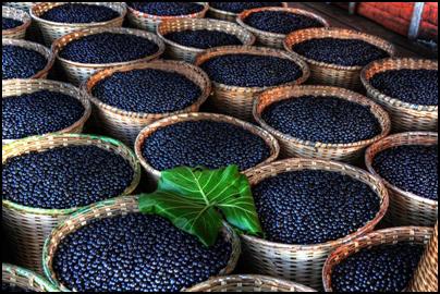 jagody acai opinie o tych owocach są rewelacyjne!